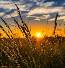 Portaria amplia número de municípios considerados localidades estratégicas para auditores federais agropecuários